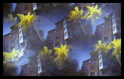 Image of daffodils taken with a camera with 7 pinholes